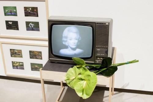 Marlēna Dītriha. Where have all the flowers gone
